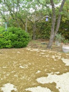 Oak pollen strands across someone else's yard, from Dean Wolf Photography